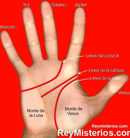 Como para leer manos share the knownledge - Leer la mano hijos ...